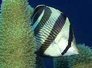 千奇百怪的深海鱼类图片