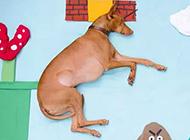 法老王猎犬创意写真图片欣赏