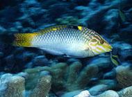 深海海鱼图片色彩缤纷