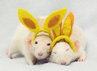 奶白色花枝鼠可爱造型图片