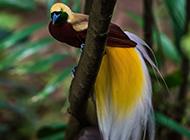 可爱的动物天堂鸟图片