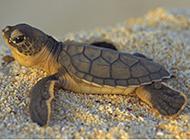 海底乌龟图片大全
