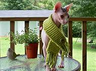 斯芬克斯猫造型时尚可爱图片