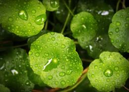绿色的叶片图片_12张