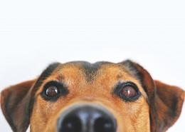 一只可爱的狗图片_10张