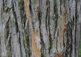 纹络各异的树皮图片_14张
