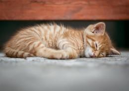 睡懒觉的小猫图片_10张