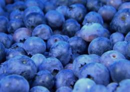 小巧精致的蓝莓图片_9张