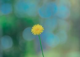 清新雅致的花朵_14张