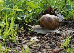 缓慢爬行的蜗牛图片_15张