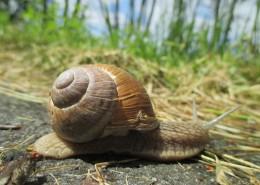 蜗牛高清图片_14张