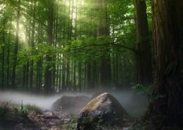 幽静的树林图片_10张