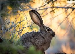 竖起双耳的兔子图片_12张