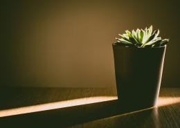 室内绿植盆栽图片_11张