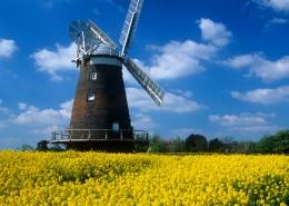荷兰风车图片_13张