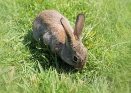 一只野生兔子图片_15张