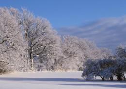 冬季唯美的森林雪景图片_16张