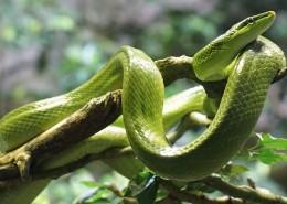 冰冷危险的毒蛇图片_15张