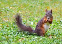 可爱的棕色松鼠图片_11张