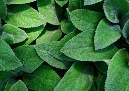 层叠的绿叶背景素材图片_12张