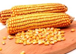 颗粒饱满的玉米图片_15张