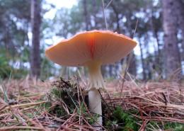 生长在地上的一只蘑菇图片_15张