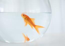 鱼缸里的金鱼图片_9张