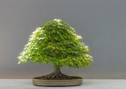 绿色植物盆景图片_14张
