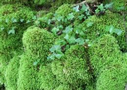 绿色的苔藓图片_14张