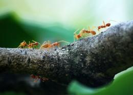 蚂蚁微距摄影图片_11张