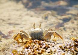 沙滩上的螃蟹图片_9张