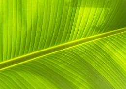 翠绿的叶子图片_9张