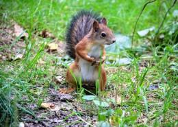 灵巧可爱的小松鼠图片_16张