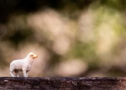 动物玩具的微距摄影图片_12张