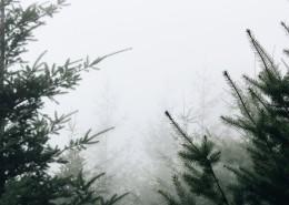 雾天的森林图片_11张