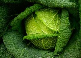 绿色健康的卷心菜图片_16张