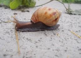 爬行的蜗牛图片_13张