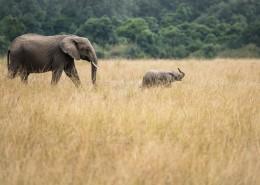 野生的大象图片_9张