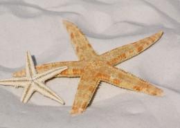 形态各异的海星图片_12张