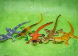蜥蜴模型图片_9张