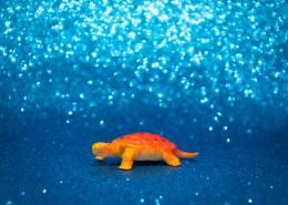 迷你乌龟玩具图片_11张