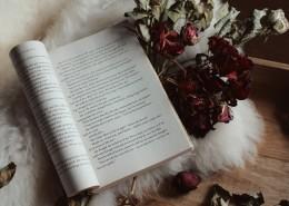 翻开的书籍的图片_10张