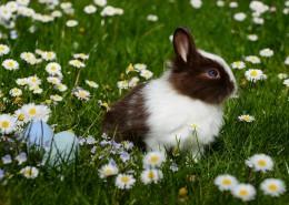 呆萌可爱的兔子图片_10张