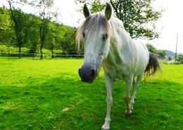 一匹英俊的白马图片_10张