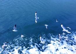 成群结队的海鸥图片_13张