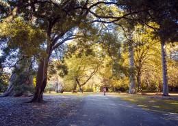 新西兰秋天自然风景图片_9张