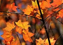 唯美而让人沉醉的秋季风景图片_10张