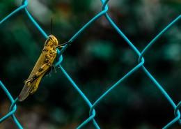 蟋蟀的特写图片_9张