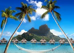 海边的椰子树图片_8张