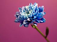 大自然朦胧花卉清新自然风景图
